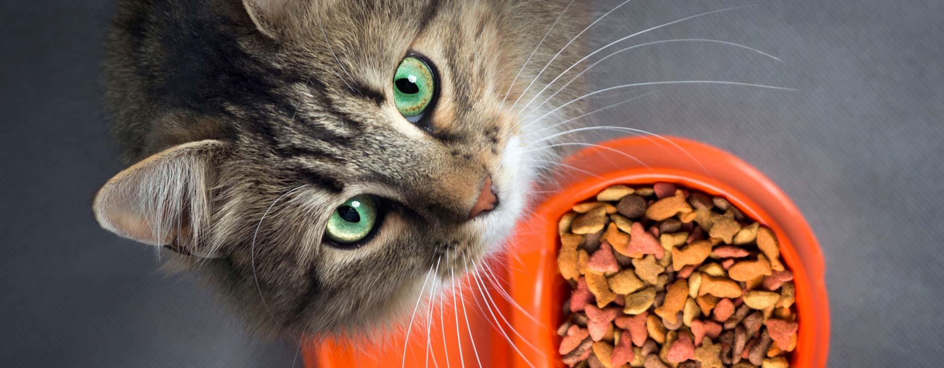 Ernährungsberatung für Tiere in Landshut