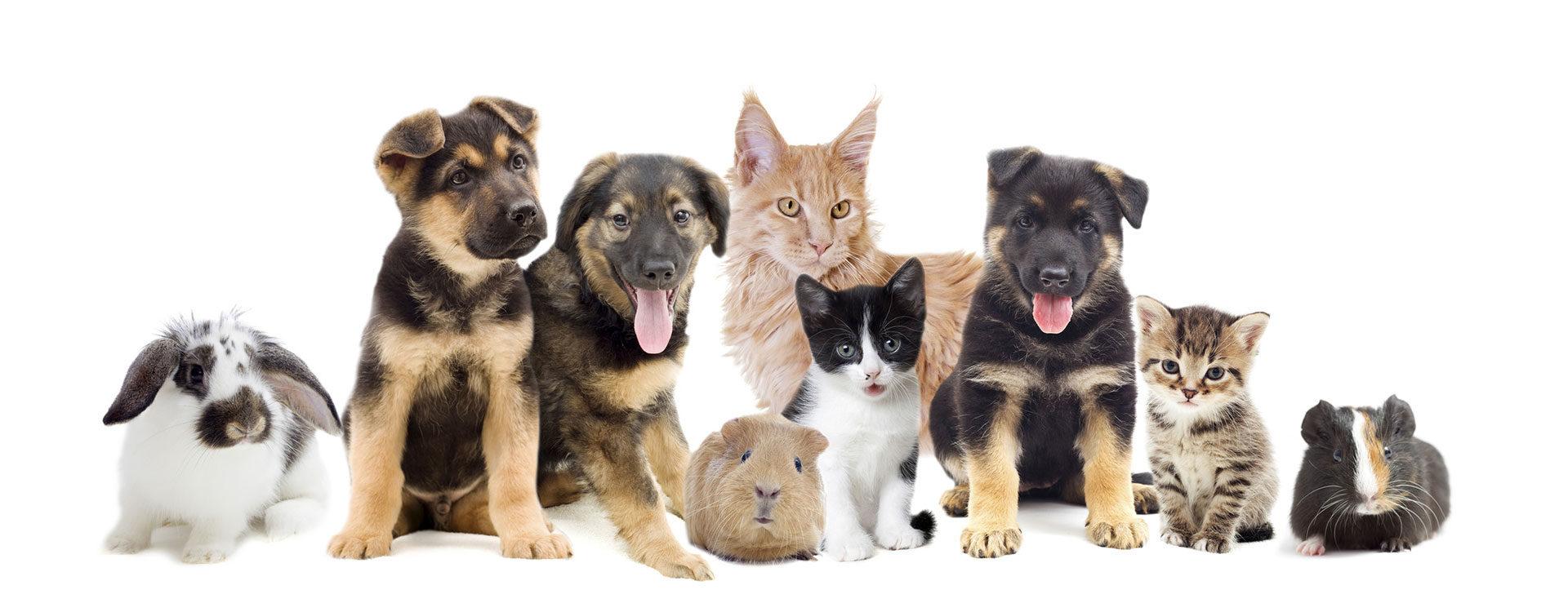 Tierarzt für Kleintiere in Landshut