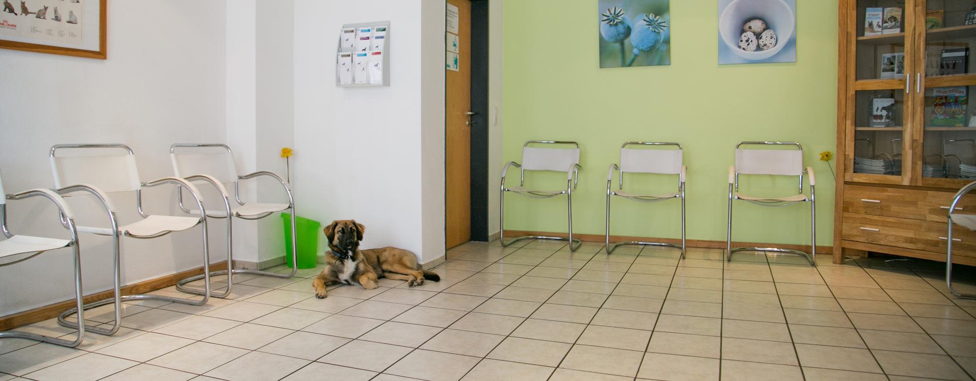 Wartezimmer von Tierartzpraxis Dr. Waibel