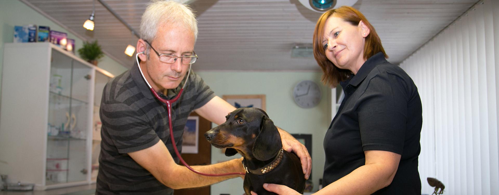 Untersuchung von Hund bei Tierarzt Dr. Waibel