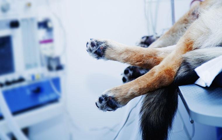 Chirurgie bei Kleintieren
