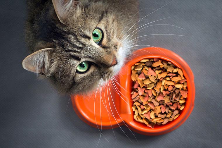Ernährungsberatung bei Tieren in Landshut